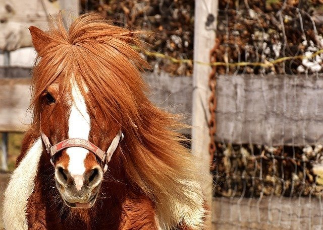 【競馬】サトノヘリオスとかいうバケモノwww
