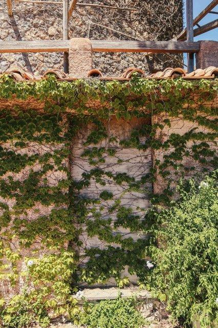 a-stone-wall-of-green-leaves.jpg