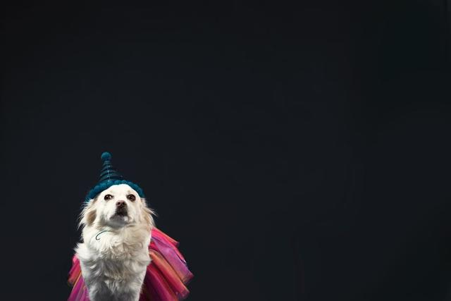 a-white-dog-in-a-wizard-hat-and-princess-dress.jpg