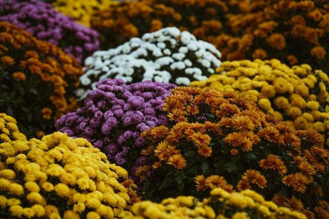 autumn-flowers-in-bloom.jpg