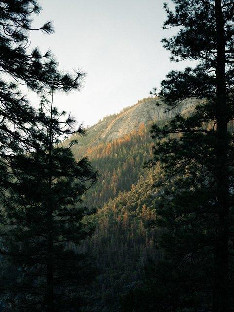 autumn-trees-hillside.jpg