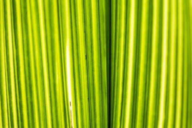 bright-green-plant-closeup.jpg