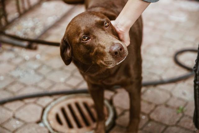 brown-eyed-dog.jpg
