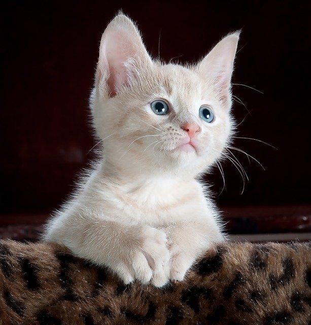 cat-551554_640.jpg
