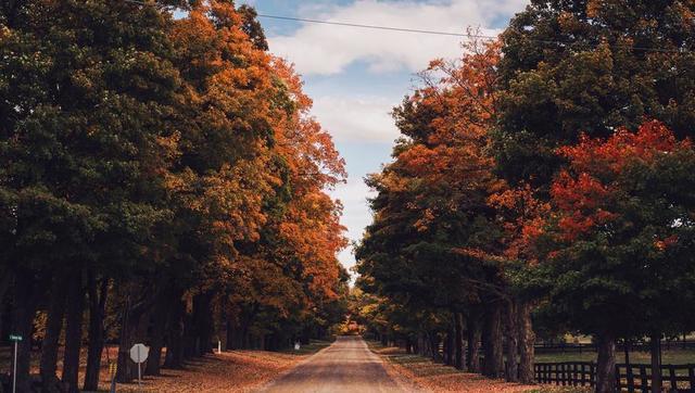 country-road-in-fall.jpg