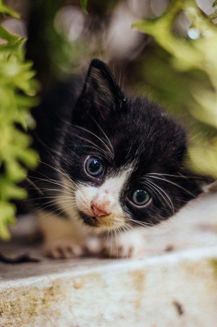 cute-curious-cat.jpg