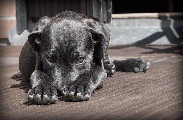 dog-423398_640.jpg