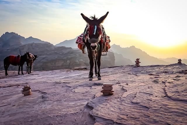donkey-4858813_640.jpg