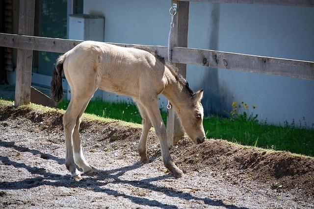 foal-5136453_640.jpg