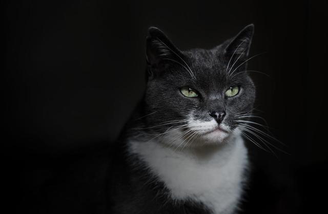 grey-and-white-cat.jpg