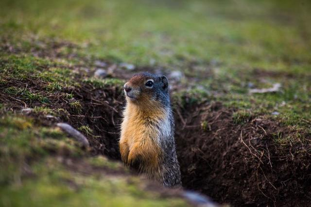 groundhog-scopes-his-surroundings.jpg