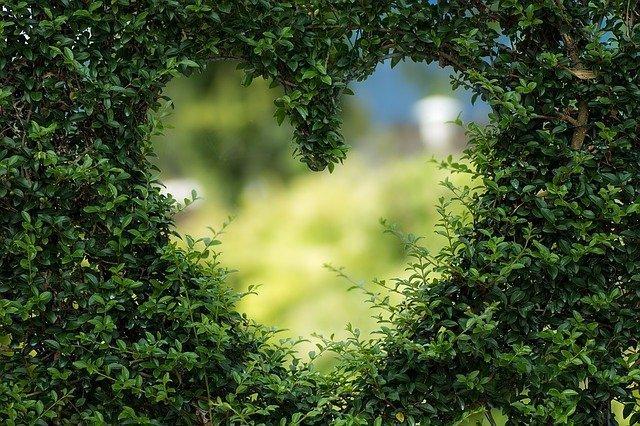 heart-1192662_640 (1).jpg