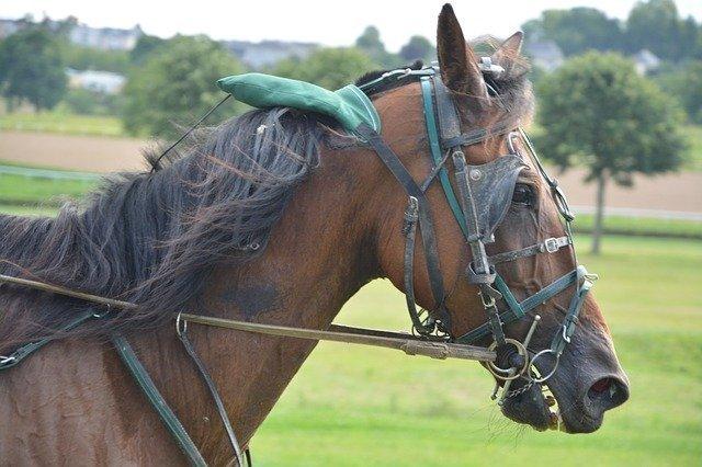 horse-2667254_640.jpg