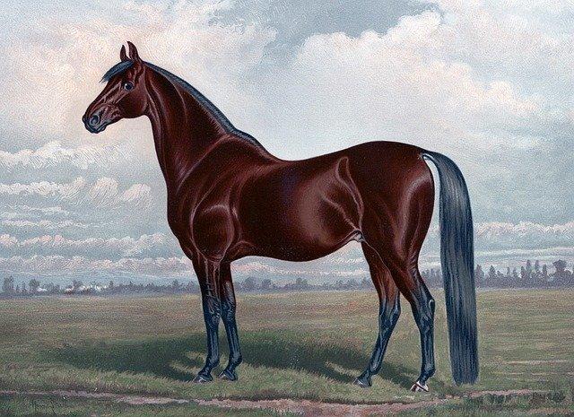 horse-316957_640.jpg