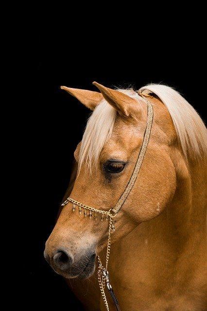 horse-3449622_640.jpg