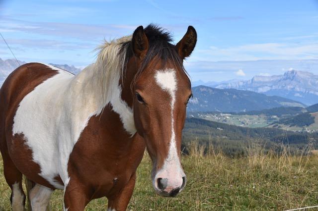 horse-4497257_640.jpg