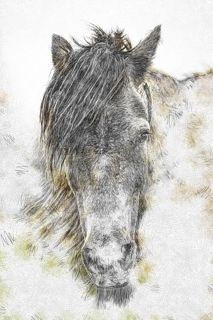 horse-4741336_640.jpg