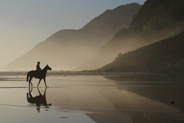 horse-5101069_640.jpg