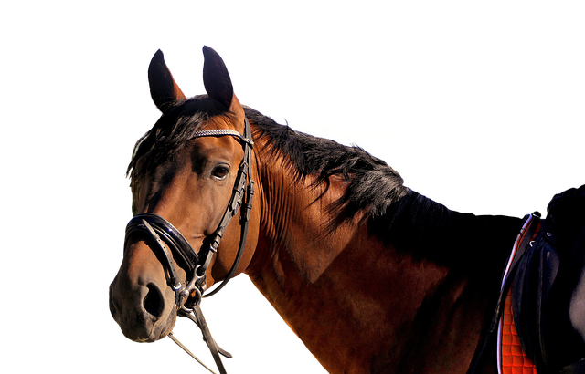 horse-5723499_640.png
