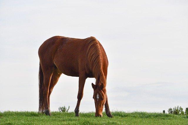 horse-5772416_640.jpg