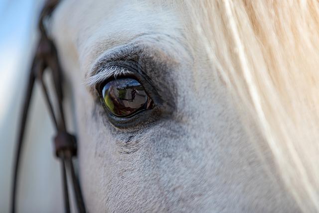 horse-6363466_640.jpg