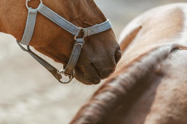 horse-nose.jpg