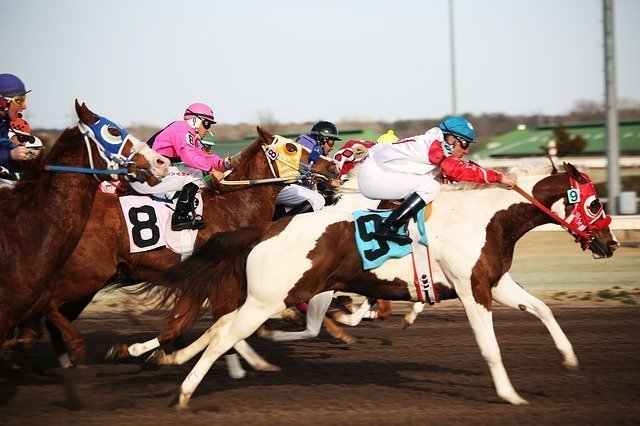 horses-2523301_640.jpg