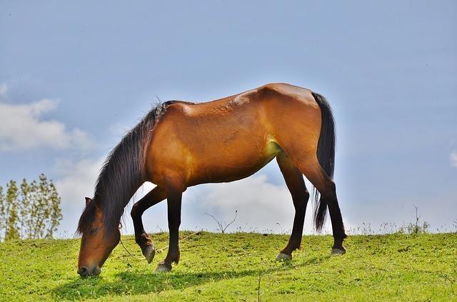 horses-2723027_640.jpg
