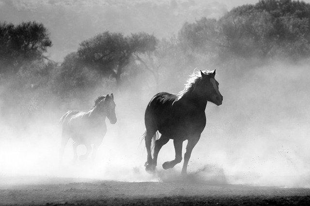 horses-430441_640.jpg