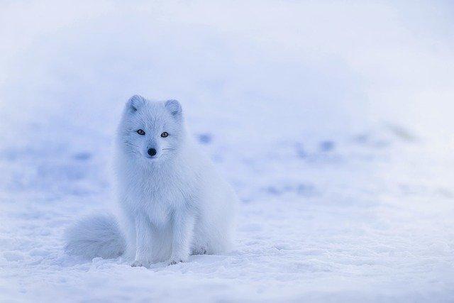 iceland-1979445_640.jpg