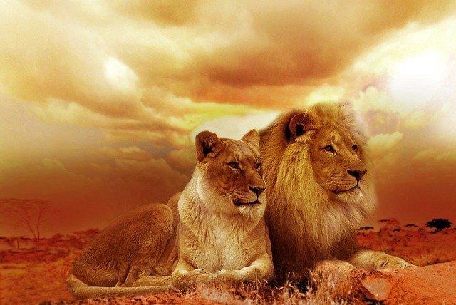 lions-577104_640.jpg
