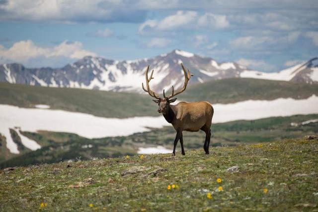 nature-elk-wildlife-adventure-mountains.jpg