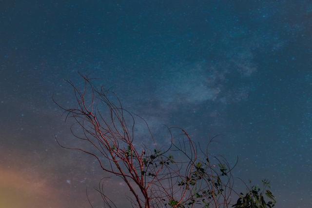 night-sky-over-red-trees-in-setting-sun.jpg