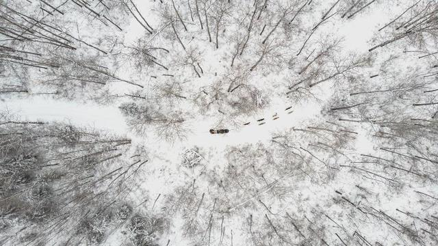 overhead-view-of-a-sled-dog-team-cutting-through-winter-forest.jpg