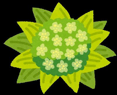 plant_fukinotou.png