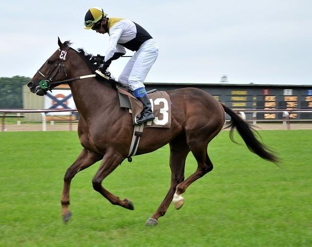 race-horse-715628_640.jpg