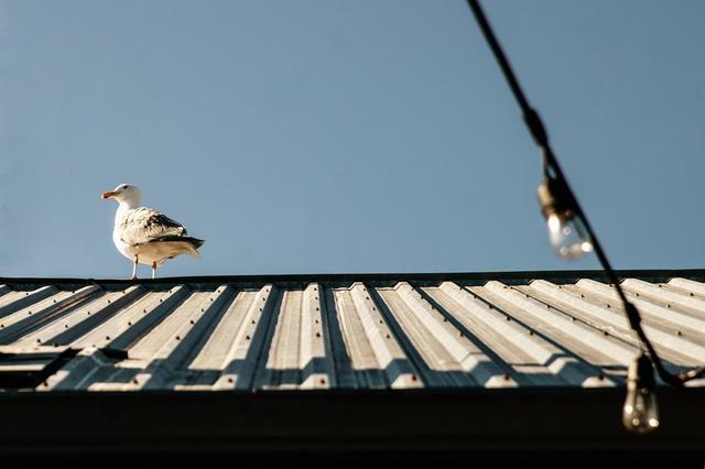 seagull-on-roof.jpg