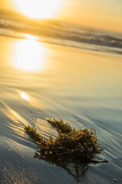 seaweed-washed-up-on-beach.jpg