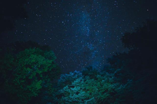 starry-night-sky-from-below-trees.jpg