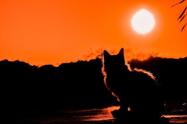 sunset-3008779_640.jpg