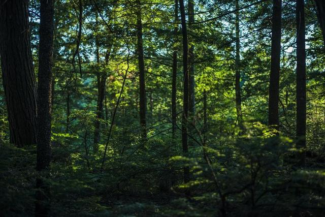 thick-lush-green-forest.jpg