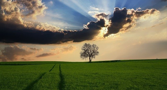 tree-2175353_640.jpg