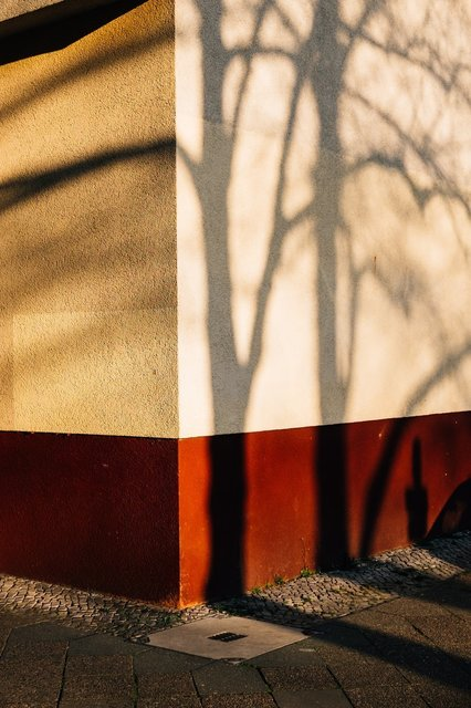 tree-banches-cast-shadows-on-a-building-wall.jpg