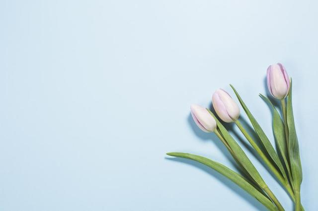tulips-on-brights-blue.jpg