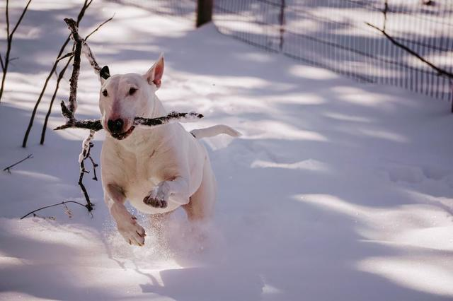 white-pup-playing-winter-fetch.jpg