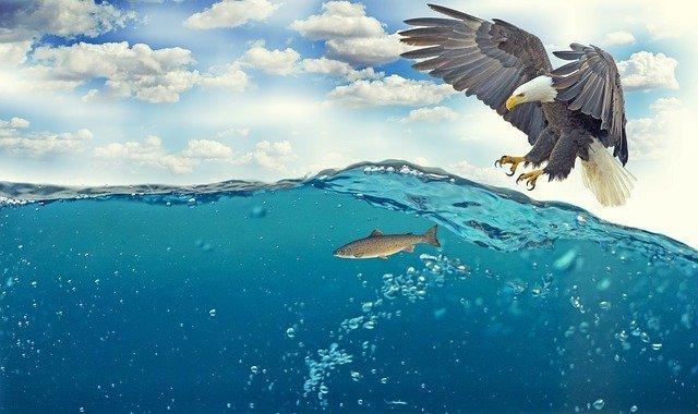 white-tailed-eagle-2015098_640.jpg