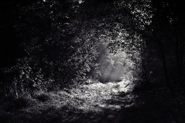 woods-690415_640.jpg