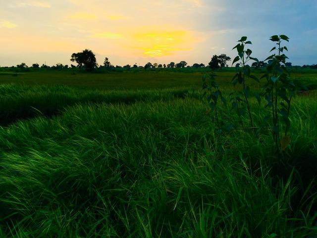 yellow-sunset-over-lush-green-fields.jpg